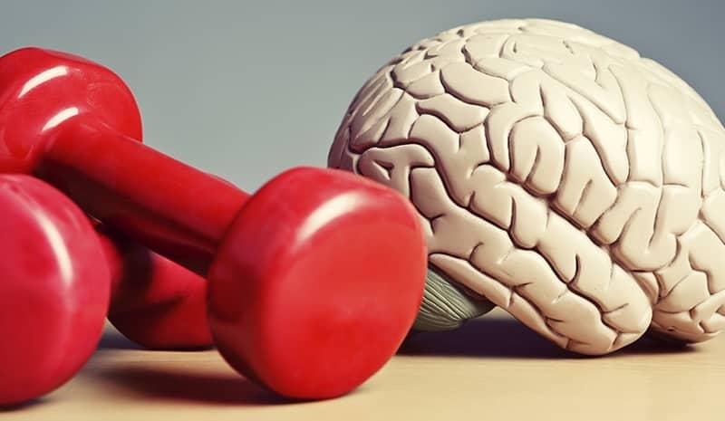 article-cerebro-10-anos-mas-joven-57271ee1378fe