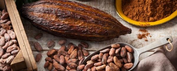 El cacao, un gran aliado para nuestro cerebro.